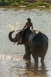 La grande eau de coup d'éléphant à elle est de retour Photo stock