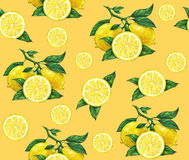 La grande illustration du beau citron jaune porte des fruits sur un fond orange Dessin de couleur d'eau de citron Configuration s Photos stock