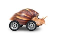 La grande lumaca marrone è azionamento veloce sulle ruote Fotografia Stock Libera da Diritti