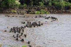 La grande migration Image stock