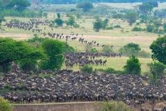La grande migration Photos stock