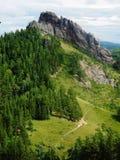 La grande montagna è coperta di foresta Fotografie Stock