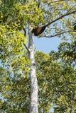La grande ruche sur le haut arbre Photos stock