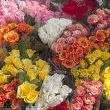 La grande sélection de différentes variétés a monté en vente Photo stock