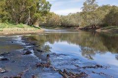 La grande sanguisuga del fiume di Hiwassee Fotografie Stock Libere da Diritti