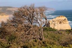 La grande strada dell'oceano - Australia Fotografie Stock