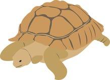 La grande tartaruga Immagine Stock Libera da Diritti