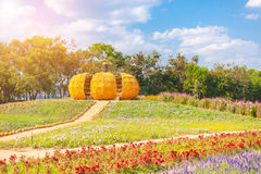 La grande zucca è fatta da cereale alla grande azienda agricola all'azienda agricola di Jim Thompson Fotografie Stock
