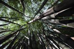 La grandezza degli alberi Fotografia Stock Libera da Diritti