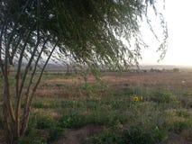 La granja imagen de archivo libre de regalías