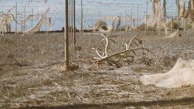 La granja agrícola abandonada se arruinó debido a los cambios de clima y calor y sequía extremos metrajes
