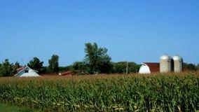 La granja americana del país con las plantas de maíz coloca y cielo azul almacen de video