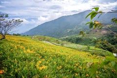 La granja daylilyTawny anaranjada de la flor del daylily en Taimali Mountai imagenes de archivo