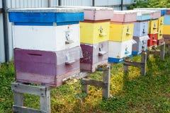 La granja de las colmenas El colmenar, fila de la abeja encorcha en un campo Imagen de archivo