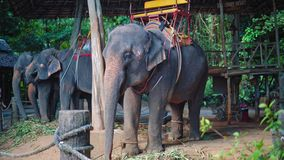 La granja del elefante en Asia, los viajeros y los turistas montan elefantes a través de la selva, safari almacen de metraje de vídeo