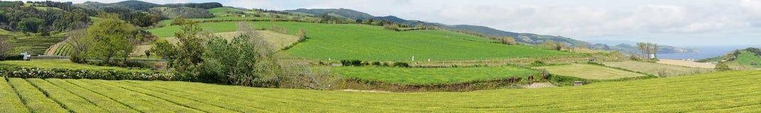La granja del té en el sao Miguel de la isla en Azores Fotografía de archivo libre de regalías