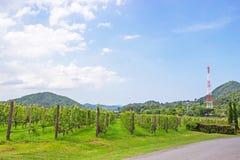 La granja y el jardín de la uva en el lago y la montaña cercanos en día un cielo brillante y es destino turístico popular de Patt fotografía de archivo libre de regalías