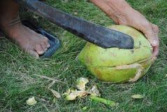 La grattugia e la noce di cocco Fotografia Stock