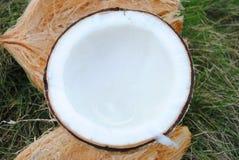 La grattugia e la noce di cocco Fotografia Stock Libera da Diritti
