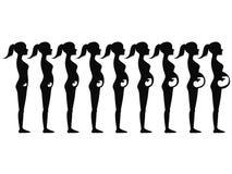 La gravidanza mette in scena la siluetta Immagine Stock Libera da Diritti