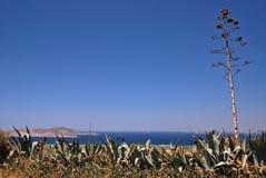 La Grecia ed agave Fotografia Stock