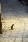 La Grecia, gattino esterno sveglio Fotografia Stock