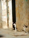 La Grecia, gattino esterno sveglio Immagini Stock Libere da Diritti