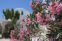 La Grecia l'isola di anti Paros Fiori variopinti con e vecchia chiesa nei precedenti immagine stock libera da diritti