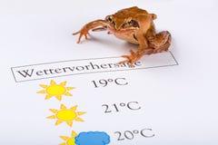 La grenouille en tant que prophète de temps fait les prévisions météorologiques, version allemande Image stock