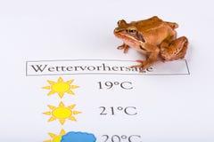 La grenouille en tant que prophète de temps fait les prévisions météorologiques, version allemande Photos stock