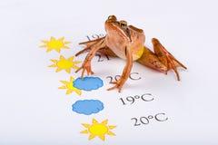 La grenouille en tant que prophète de temps fait les prévisions météorologiques, version universelle Photos stock