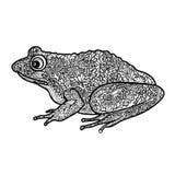 la grenouille a isolé Illustrati ornemental noir et blanc de grenouille de griffonnage Image libre de droits