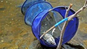 La grille avec les poissons sur la rivière banque de vidéos