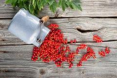 La groseille rouge a dispersé sur la table en bois avec les feuilles vertes Images libres de droits