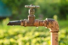 La grue de jardin avec de l'eau se laisse tomber sur un fond vert Photo libre de droits