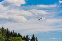 La grue vole dans le ciel Photo libre de droits