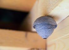 La guêpe vide de nid est une texture bien aérée ronde de papier de porcs avec la conception d'espace de copie sur un fond en bois image libre de droits