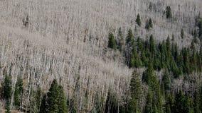 La guerra degli alberi Fotografia Stock Libera da Diritti