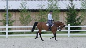 La guida dell'uomo sul cavallo all'arena archivi video