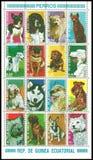 La Guinée équatoriale, chiens photos libres de droits