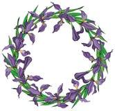 La guirlande de l'iris fleurit le cadre de vecteur illustration libre de droits