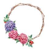 La guirnalda de la acuarela con la hortensia y el perro subió Flores pintadas a mano del rosa y violetas con las hojas del eucali ilustración del vector