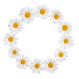 La guirnalda de la flor de la manzanilla con el lugar para su texto o imagen es ISO Fotos de archivo