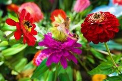 La hada y manosea abejas. Foto de archivo