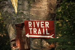 La hausse de traînée de rivière se connectent l'arbre de bouleau Photos libres de droits