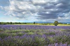 La haute Provence, France Image libre de droits