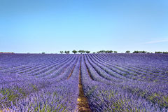 La haute Provence, France Images stock