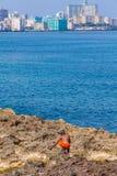 LA HAVANE, CUBA - 1ER AVRIL 2012 : Garçon indigène et secteur moderne Ved Photo libre de droits