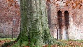 La haya girante se va, castillo de Nijenbeek, Holanda almacen de video