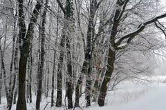 La helada agradable de la composición adornó grupos de árboles foto de archivo